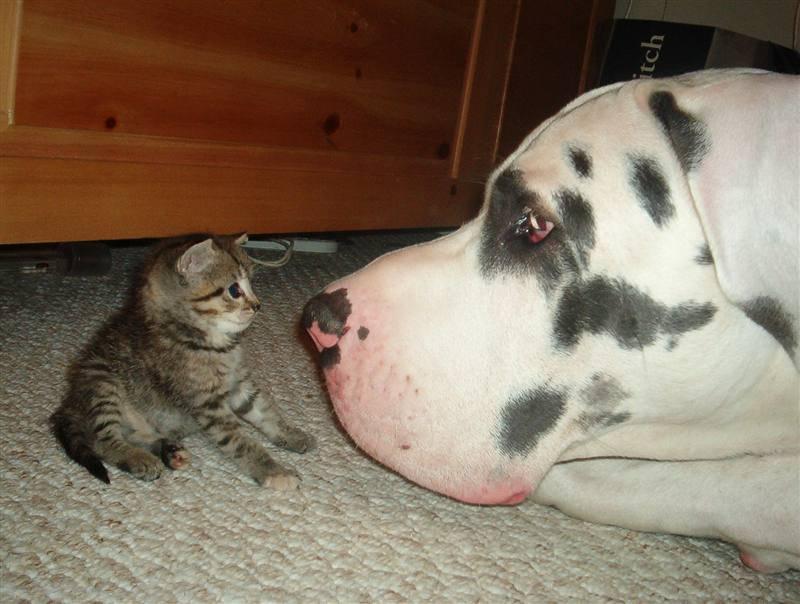 Картинки смешные про котов и собак с надписями смешные до слез, поздравление открытка