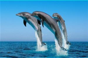 dolphincoast