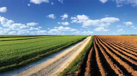 farming-south-africa
