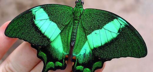 Butterflies-for-Africa-Pietermaritzburg