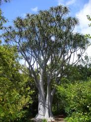 Aloe-Succulent-Plants