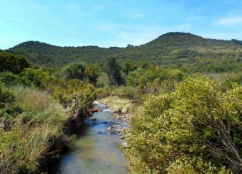 Faerie_Glen_Nature_Reserve