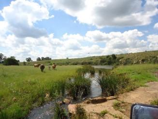 Farm-for-sale-Gauteng