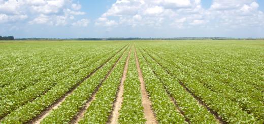 Gauteng-Farms-For-Sale