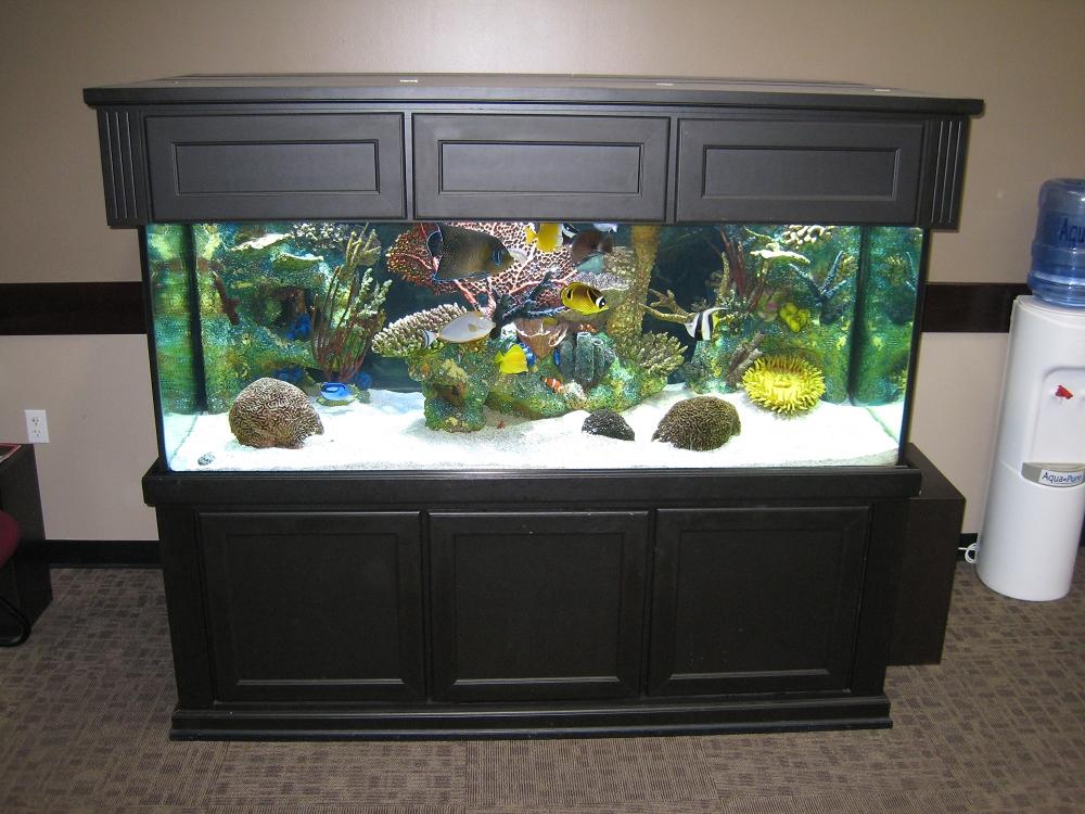10 tips on how to make a fish tank junk mail blog rh blog junkmail co za great home aquarium fish great home aquarium fish