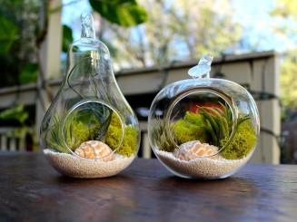 Apple-and-pear-shaped-terrarium