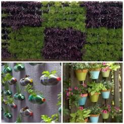 verticle-garden