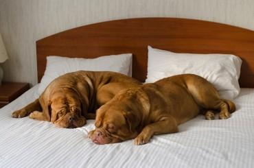 pet-friendly-accommodation