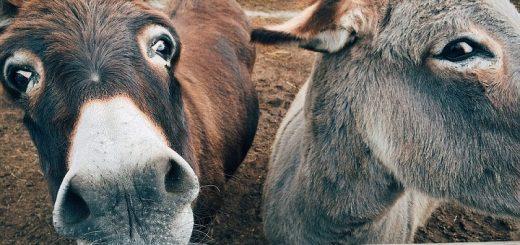 donkey-trading