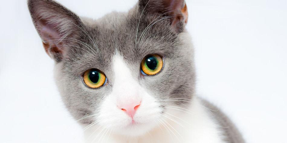 Get Pet Insurance | Junk Mail