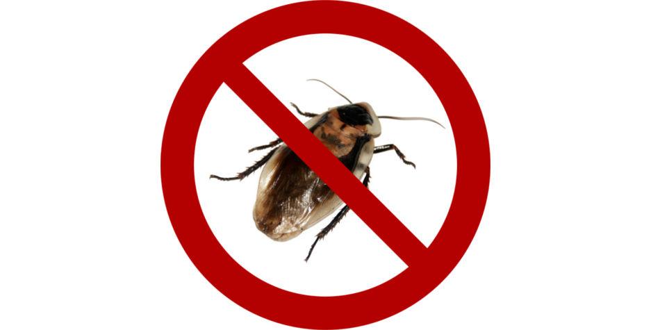 Pest Control Services | Junk Mail