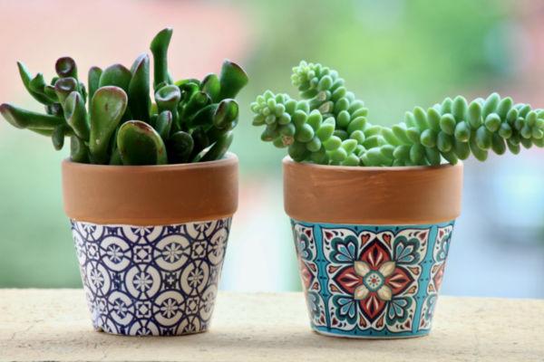 Plant Succulents In Your Garden Pots | Junk Mail