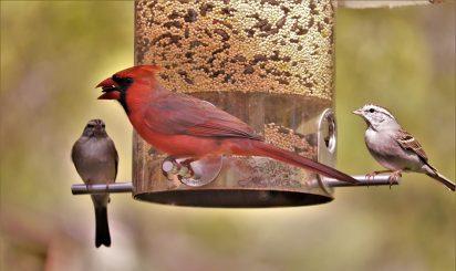 Buy A Bird Feeder For Bird-Feeding Month | Junk Mail